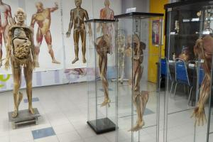 Full & Segmented Plastinated Body Parts